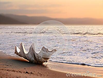 Seashell sulla spiaggia