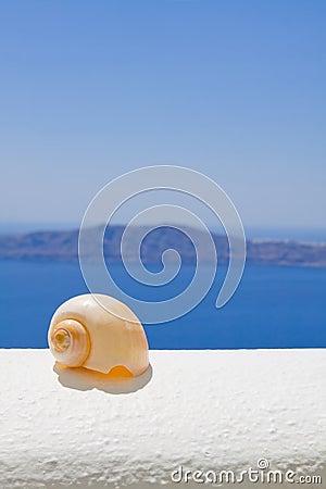 A Seashell in the Sun