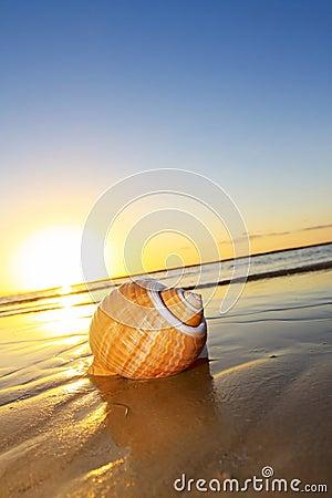 Seashell Sunset