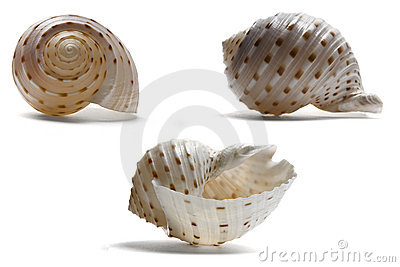 Seashell from three Angles