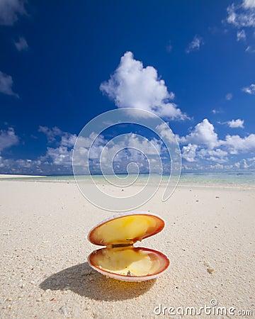 Seashell on tropical beach