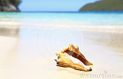 Seashell tropical beach