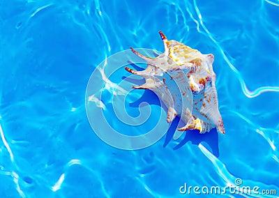 Seashell under water.