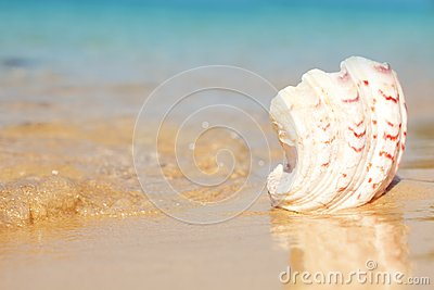Seashell and waves
