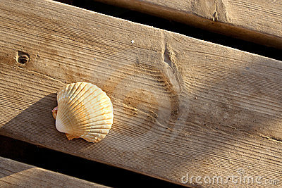 A seashell on a wooden dock