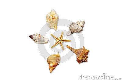Seashells 01