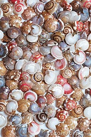 Free Seashells Stock Photo - 12453460