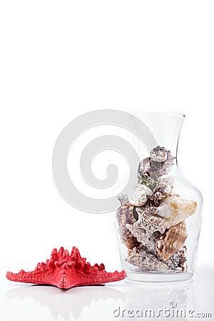 Free Seashells Stock Photos - 29509363