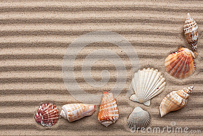 Seashells amid undulating sand