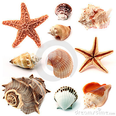 Free Seashells And Starfish Stock Photography - 10756292