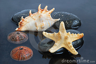 Seashells in black water
