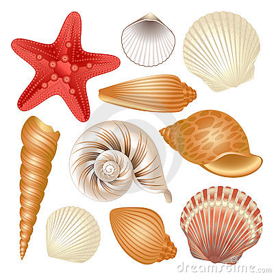 Free Seashells Collection Royalty Free Stock Photography - 20788207