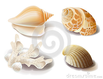 Seashells and coral
