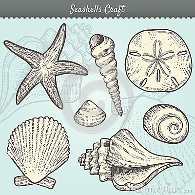 Free Seashells Craft Elements Set Royalty Free Stock Photo - 24798795