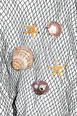 Seashells on fishing net