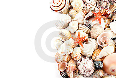 Seashells half background.