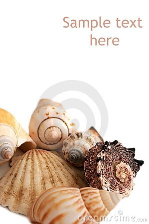 Seashells isolated on white background