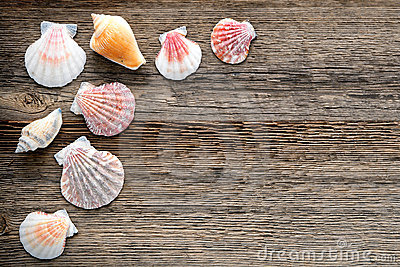 Seashells on Old Weathered Wood Planks Background