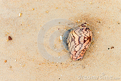 Seashells with a pattern on the sand