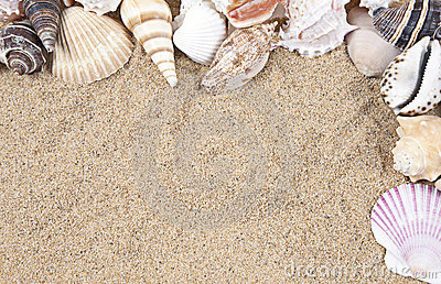 Seashells and Sand Border