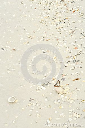 Seashells in the sand vertical