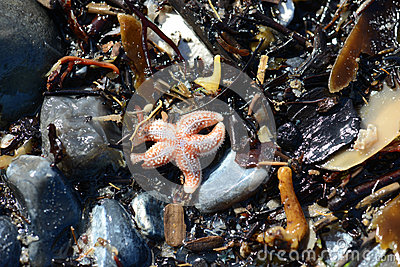 Seashells and seastar on the sand