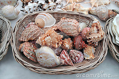 Seashells for selling.