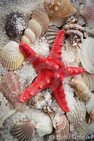 Seashells and starfish