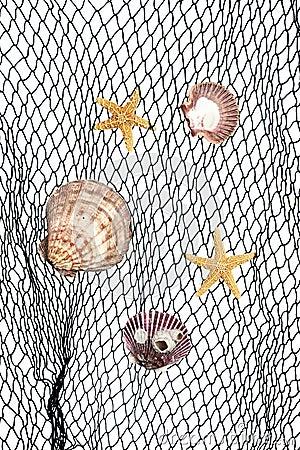 Seashells su rete da pesca fotografia stock libera da - Rete da pesca per decorazioni ...