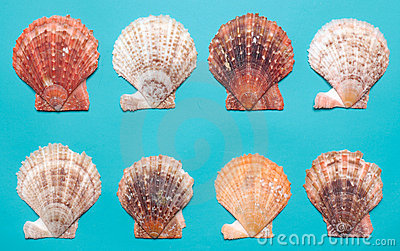 Seashells on turquoise background
