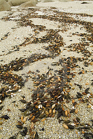 Seashore Debris Patterns