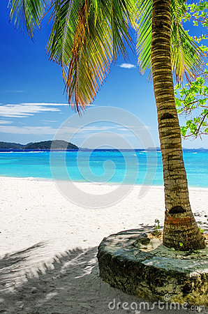 Green tree on  white sand beach. Malcapuya island,