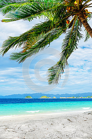 Green tree on  white sand beach.