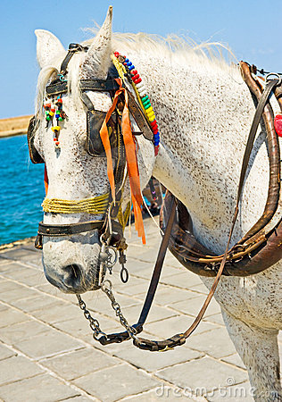Seaside horse.