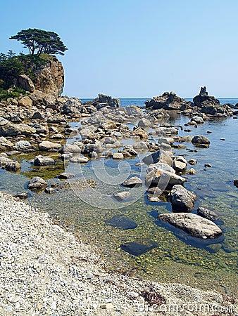 Free Seaside Korean Pine Island Royalty Free Stock Photo - 1787855
