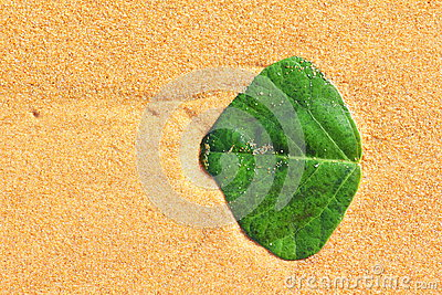 Green leaf on wet sand