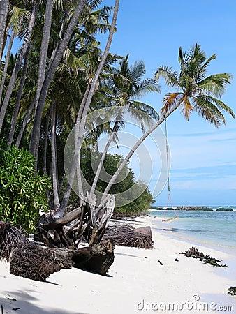 Seaside - palms and hammock