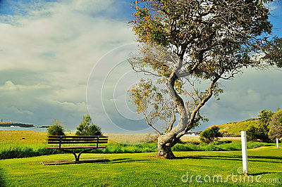 Seaside wooden bench
