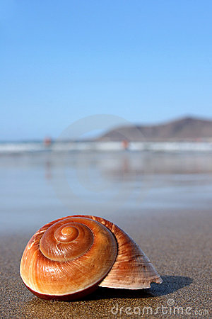 Free Seasnail Royalty Free Stock Photos - 2296158