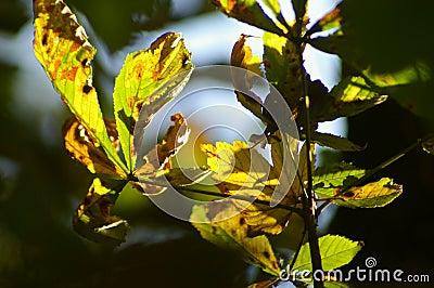 Season and autumnal leaves