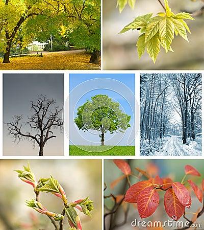 Season landscape