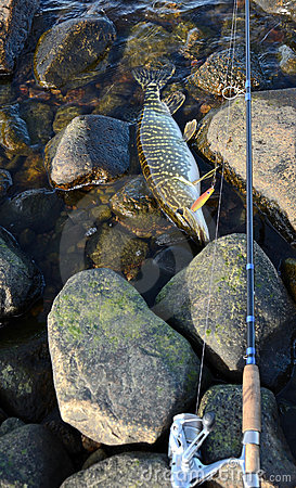 Season for pike fishing