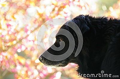 Season : spring, dog