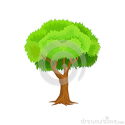 Free Season Tree With Green Leaves Vector Illustration On A White Background Royalty Free Stock Images - 112747759