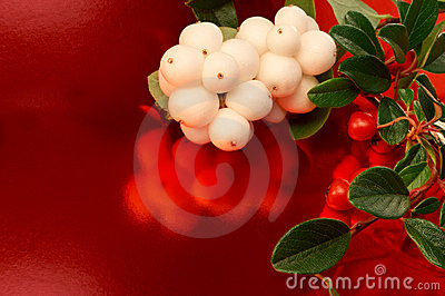 Seasonal berries