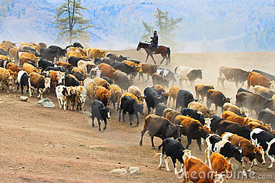 Seasonal livestock migration in Xinjiang China Editorial Stock Image