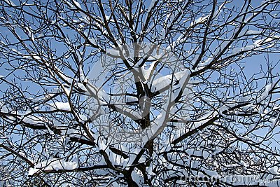 Seasonal photo background