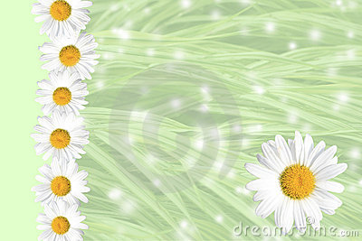 Seasonal Summer Daisy and Grass Background