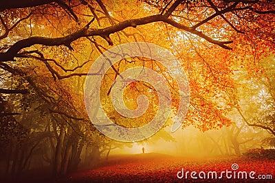 Seasonal forest fall walk Stock Photo