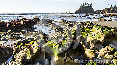 Seastack Sanctuary and Hollow Green Weed at Low Tide Second Beach Olympic National Park